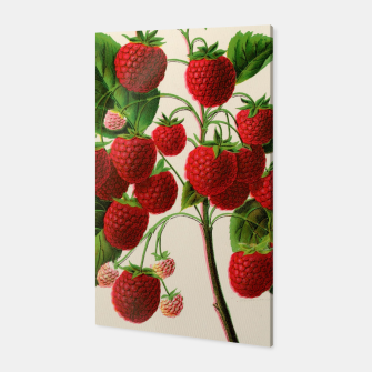 Thumbnail image of  Canadian Horticulturalist 1888-96 - Raspberries Canvas, Live Heroes