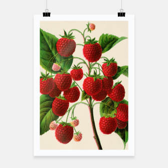 Thumbnail image of  Canadian Horticulturalist 1888-96 - Raspberries Poster, Live Heroes