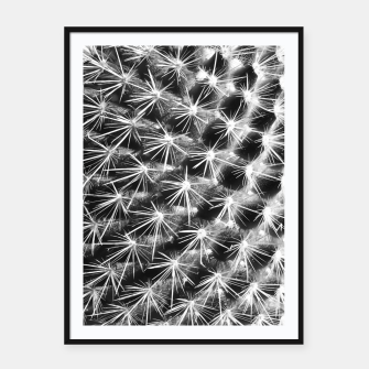 Miniatur closeup cactus texture with morning sunlight in black and white Framed poster, Live Heroes