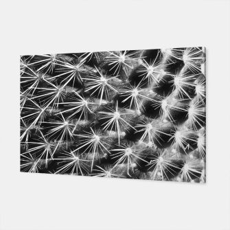 Thumbnail image of closeup cactus texture with morning sunlight in black and white Canvas, Live Heroes