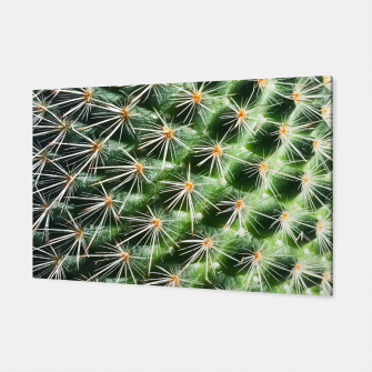 Thumbnail image of closeup green cactus texture with morning sunlight Canvas, Live Heroes
