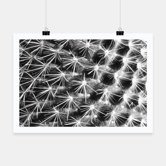 Miniature de image de closeup cactus texture with morning sunlight in black and white Poster, Live Heroes