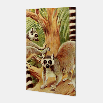 Thumbnail image of  Kuhnert, Friedrich Wilhelm - Wild Life of the World 1916 v.3 (Ring-tailed Lemur) Canvas, Live Heroes