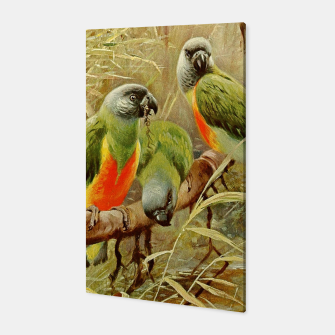 Thumbnail image of  Kuhnert Wilhelm-Wild Life of the World 1916 v.3 (Senegal Parrot) Canvas, Live Heroes