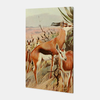 Thumbnail image of  Kuhnert, Friedrich Wilhelm  - Wild Life of the World 1916 v.3 (Springbok) Canvas, Live Heroes