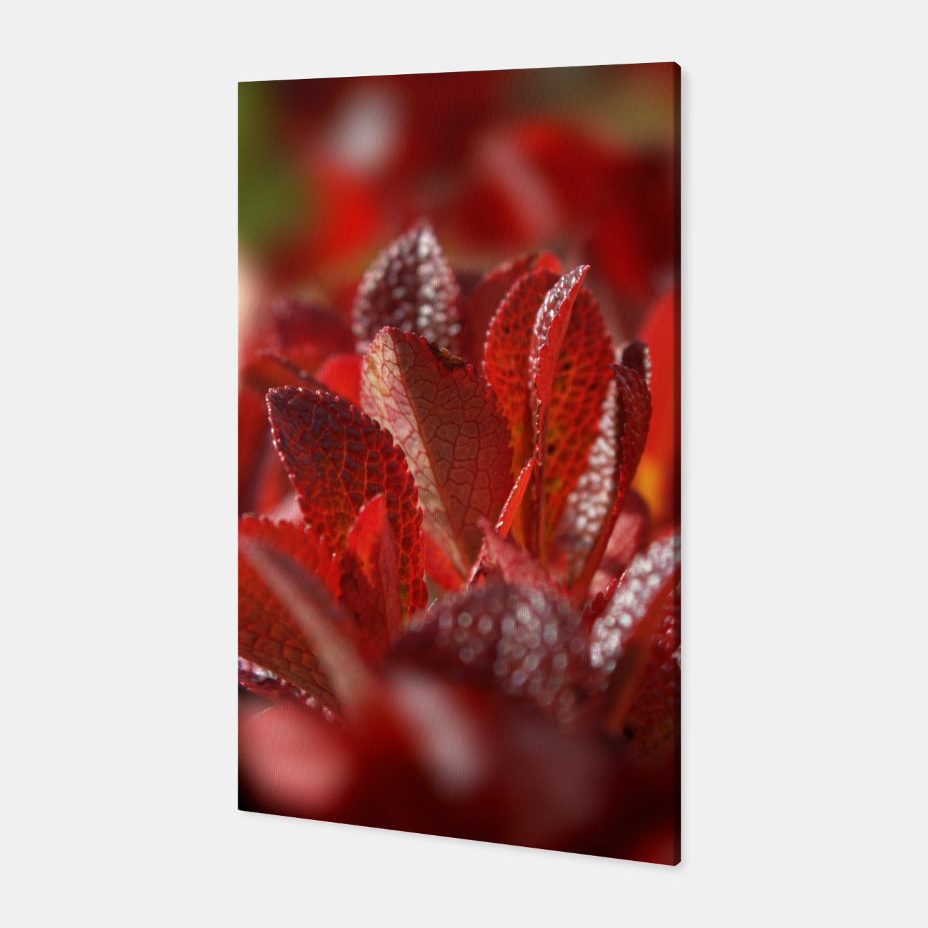 Image of Bearberry Canvas - Live Heroes