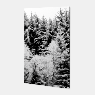 Miniaturka Blank and white pine trees Canvas, Live Heroes