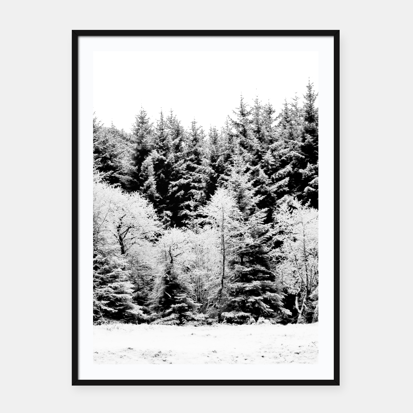 Blank and white pine trees Framed poster, Live Heroes