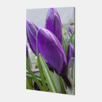 Miniature de image de buds of crocuses Canvas, Live Heroes