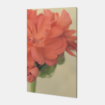 Miniatur Close-up Zonal Pelargonium Flower Canvas, Live Heroes