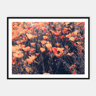 Thumbnail image of blooming yellow poppy flower field in California, USA Framed poster, Live Heroes