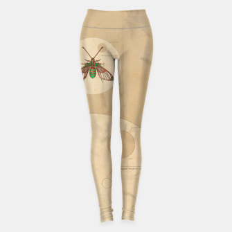 Miniaturka Sorority e.21081 Leggings, Live Heroes