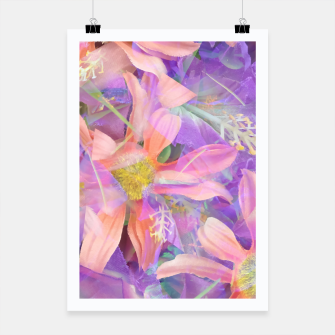 Thumbnail image of blooming pink daisy flower with purple flower background Poster, Live Heroes
