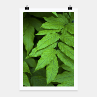 Thumbnail image of LEAF 1 Poster, Live Heroes