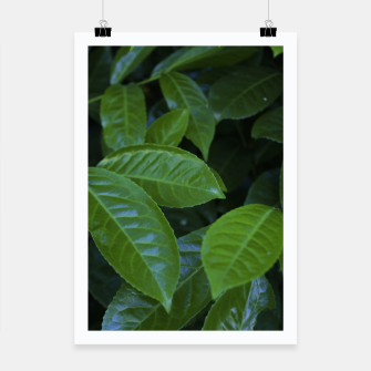 Thumbnail image of LEAF 3 Poster, Live Heroes