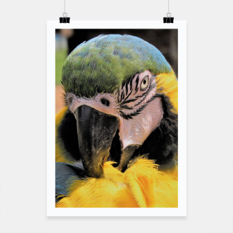 Thumbnail image of Parrot Yellow Ara Poster, Live Heroes