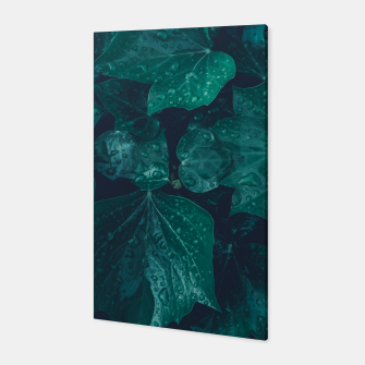 Thumbnail image of Dark emerald green ivy leaves water drops Canvas, Live Heroes