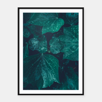 Thumbnail image of Dark emerald green ivy leaves water drops Framed poster, Live Heroes