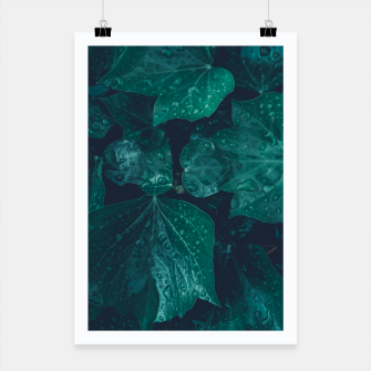 Thumbnail image of Dark emerald green ivy leaves water drops Poster, Live Heroes