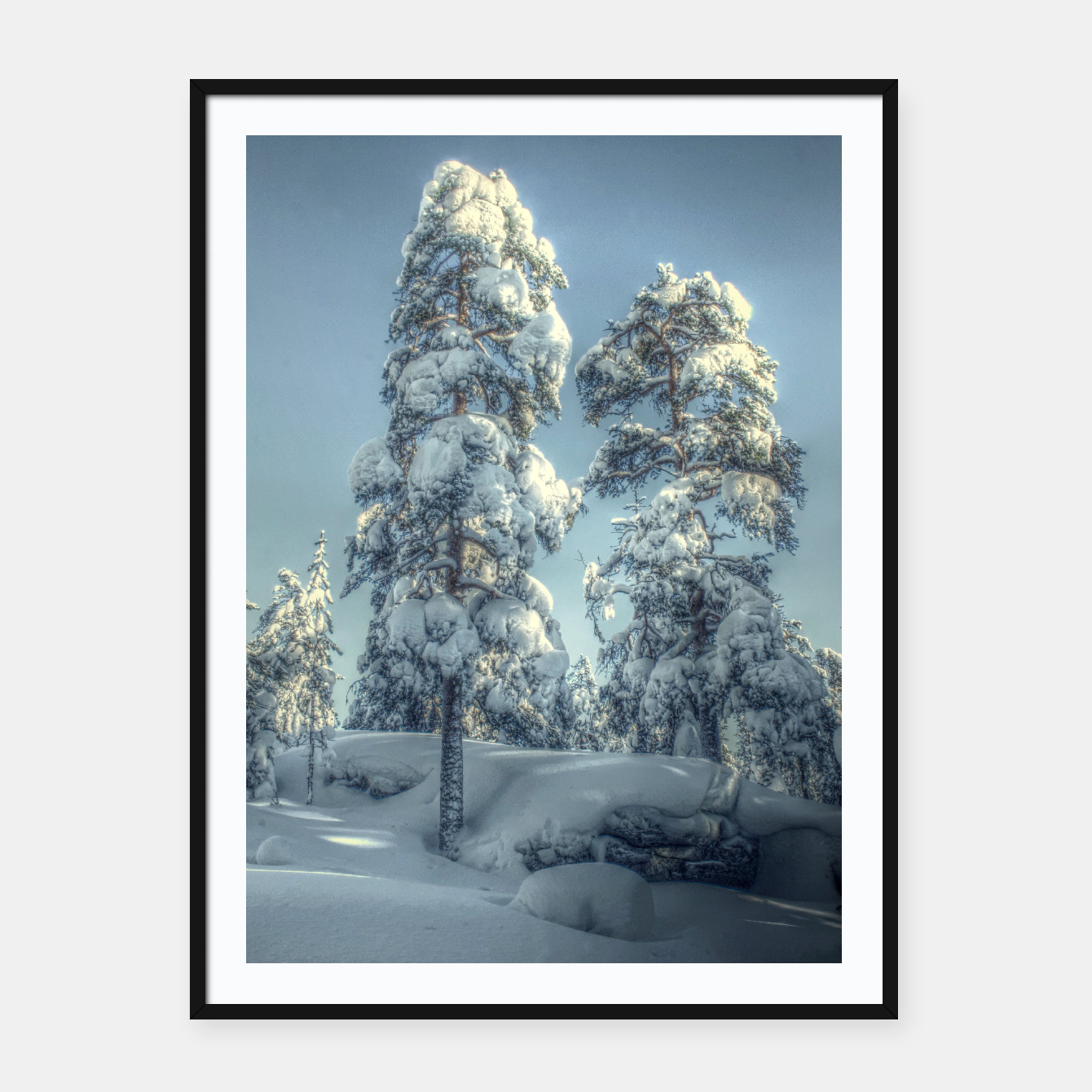 Image of Snowy trees - Live Heroes