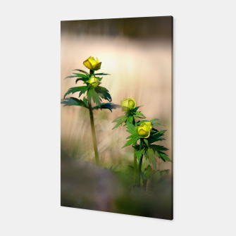 Thumbnail image of Globeflower Canvas, Live Heroes