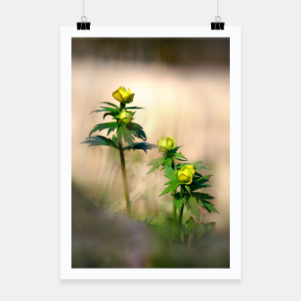 Thumbnail image of Globeflower Poster, Live Heroes