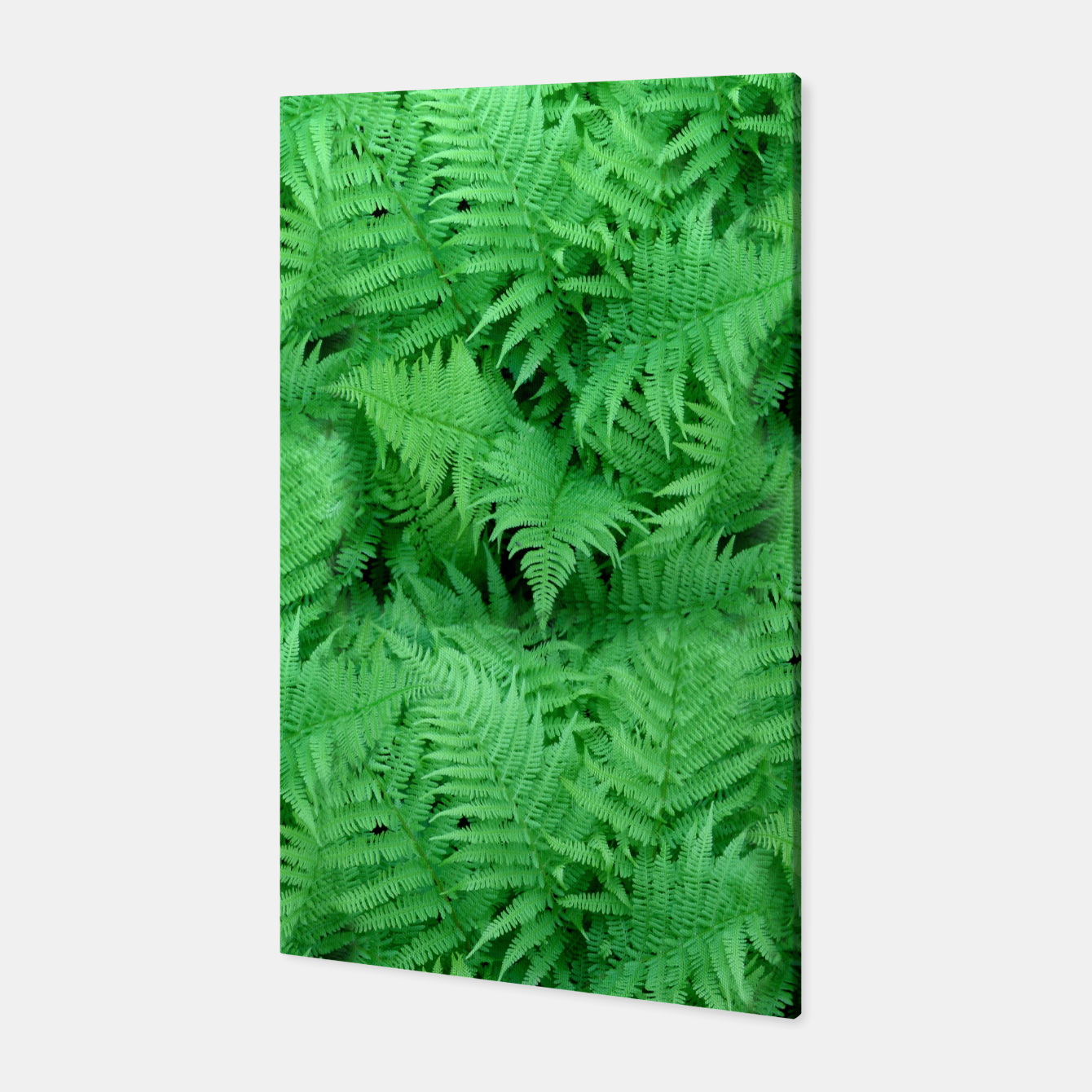 Image of Fern Canvas - Live Heroes