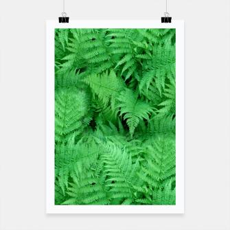 Thumbnail image of Fern Poster, Live Heroes