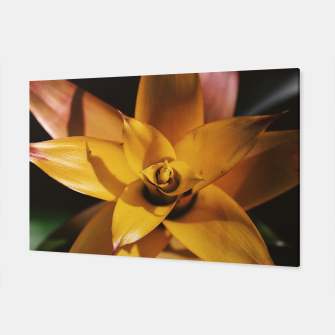 Thumbnail image of Bromeliad Canvas, Live Heroes
