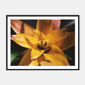 Thumbnail image of Bromeliad Framed poster, Live Heroes