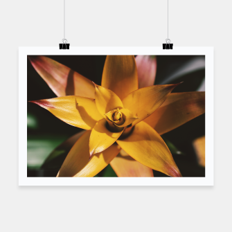 Thumbnail image of Bromeliad Poster, Live Heroes