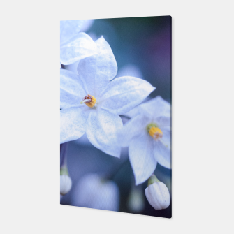 Thumbnail image of Jasmine Nightshade Flowers #3 #floral #art  Canvas, Live Heroes