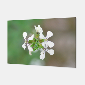 Thumbnail image of Vicia Faba Flower Canvas, Live Heroes