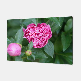 Thumbnail image of Paeoniae sp. Flower II Canvas, Live Heroes