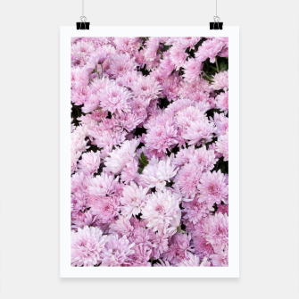 Miniature de image de A Sea of Light Pink Chrysanthemums #2 #floral #art Plakat, Live Heroes