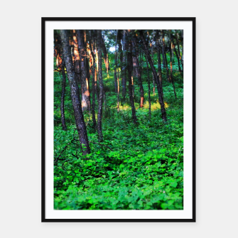 Thumbnail image of Patchy Sunlight in The Woods Framed poster, Live Heroes