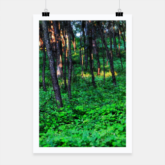 Thumbnail image of Patchy Sunlight in The Woods Poster, Live Heroes
