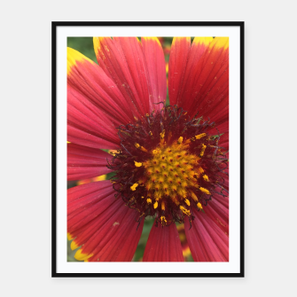 Thumbnail image of Red and Orange Flower Framed poster, Live Heroes