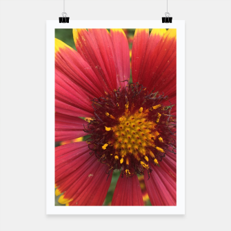 Thumbnail image of Red and Orange Flower Poster, Live Heroes