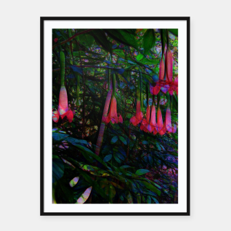 Thumbnail image of Pink Trumpet Flowers Framed poster, Live Heroes