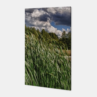 Thumbnail image of Reeds Along a Campground Lake Canvas, Live Heroes