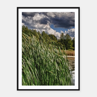 Thumbnail image of Reeds Along a Campground Lake Framed poster, Live Heroes