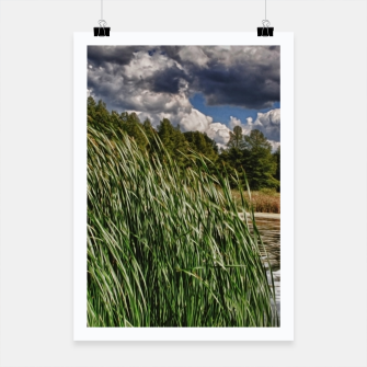 Thumbnail image of Reeds Along a Campground Lake Poster, Live Heroes