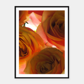 Thumbnail image of Pastel Pink and Orange Roses Framed poster, Live Heroes
