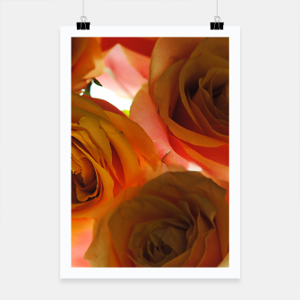 Thumbnail image of Pastel Pink and Orange Roses Poster, Live Heroes
