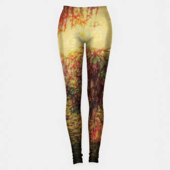 Thumbnail image of The Sun Through Fir Trees Leggings, Live Heroes