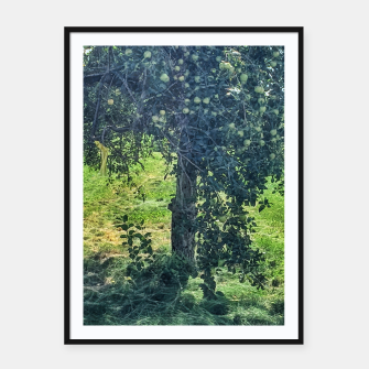 Thumbnail image of Green Apple Tree Framed poster, Live Heroes