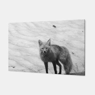 Thumbnail image of Fox In The Snow, Live Heroes