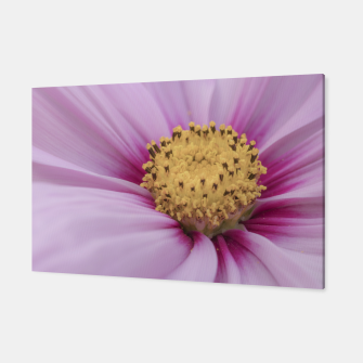 Thumbnail image of Pink Cosmos Flower Canvas, Live Heroes