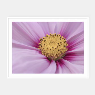 Miniatur Pink Cosmos Flower Framed poster, Live Heroes